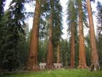Giant Sequoias and Pioneers Cabin