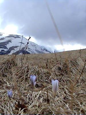 Цветы на плато Лагонаки